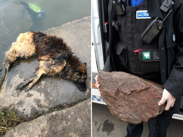 OUTRAGEUS! Dog owner who tied heavy rock to pet and threw it into river. Fined only £80!