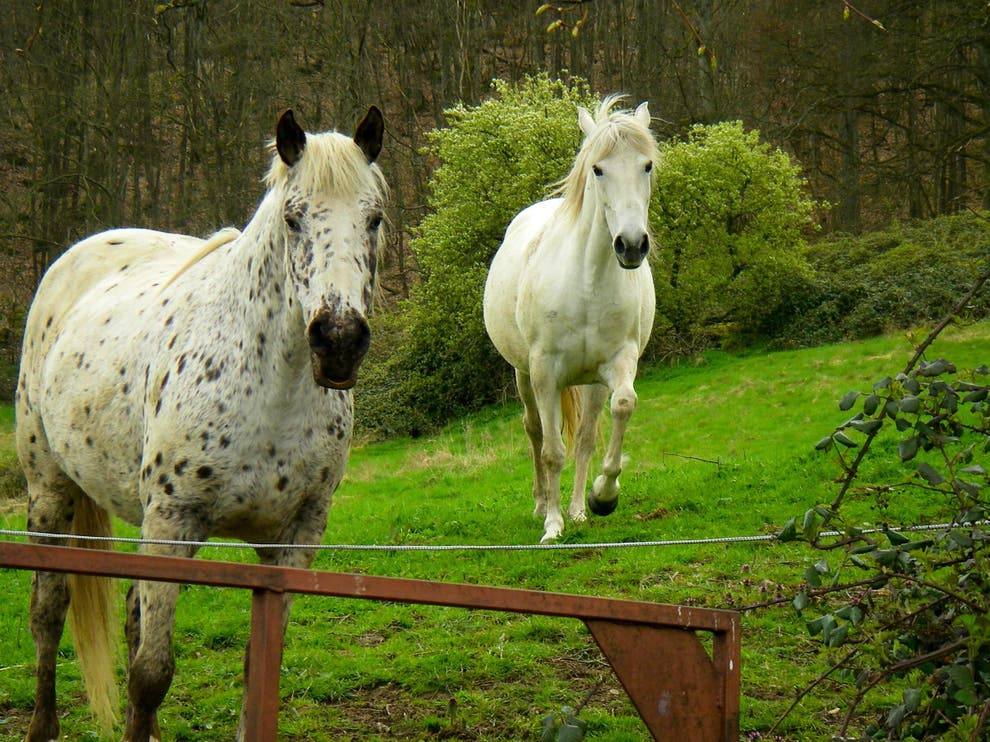 Mysterious series of 'barbaric' horse killings and mutilations in French countryside under investigation.