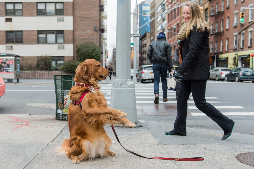 Meet the NYC Dog Who Stands on the Corner Offering Hugs