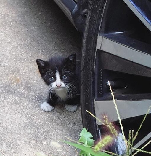 Kitten who showed up on a family's backyard asking for help [VIDEO]