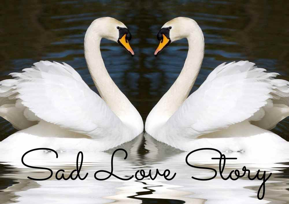 Incredibly sad love story. Trains in Germany were delayed because of a swan mourning its partner.