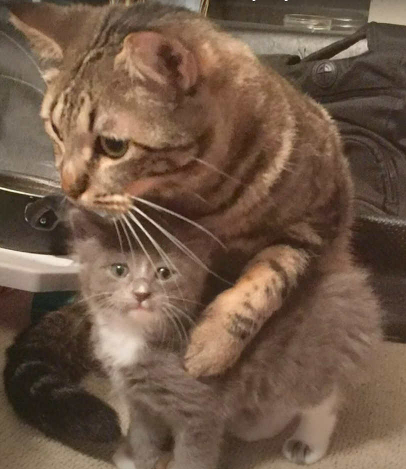 Cat comforts the abandoned kitten brought to the house and they become best friends [VIDEO].