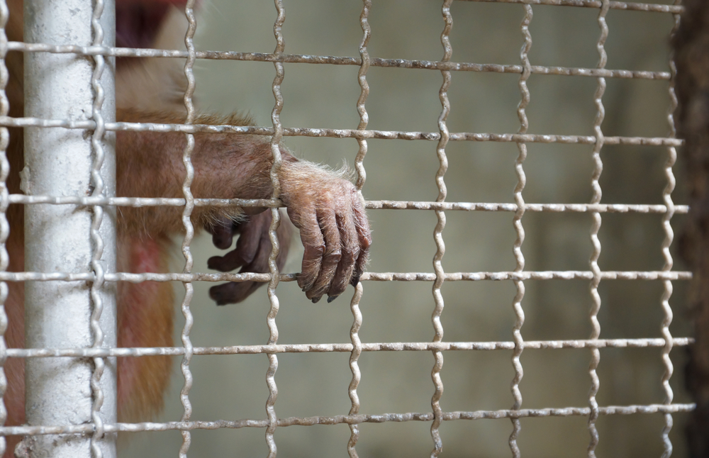 Could Banning Wildlife Markets and Wildlife Trade Stop the Next Pandemic?