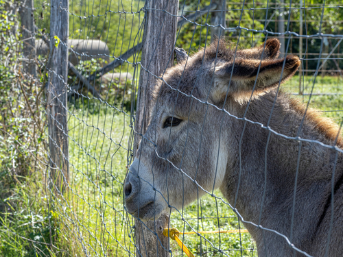 Donkeys could soon be listed as endangered species! Have you ever thought this would happen?