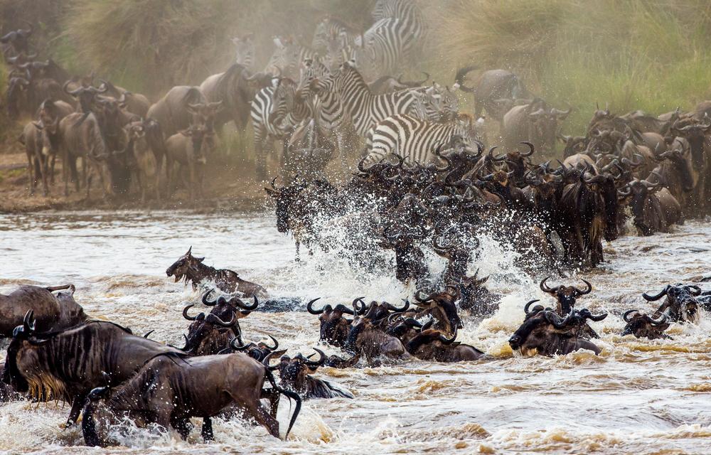 [NEWS] UN Convention Of Migratory Species.