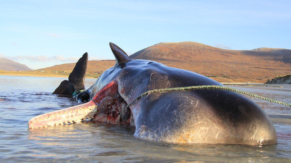 HOW TO EASILY KILL A PREGNANT WHALE? FILL IT UP WITH PLASTIC…